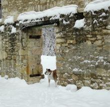 scarlett in snow